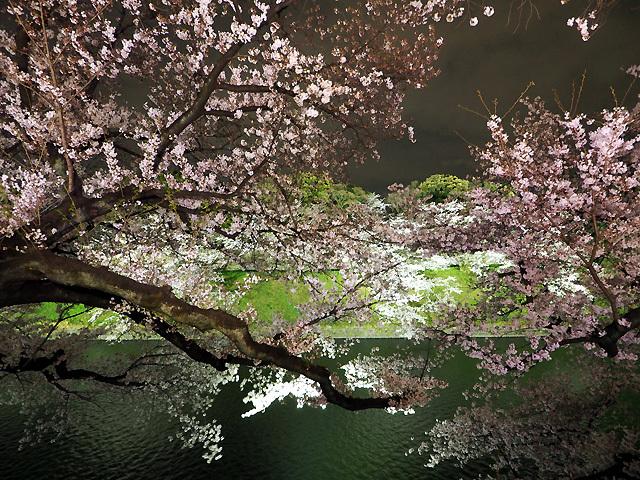 夜桜散歩_d0358793_09013883.jpg