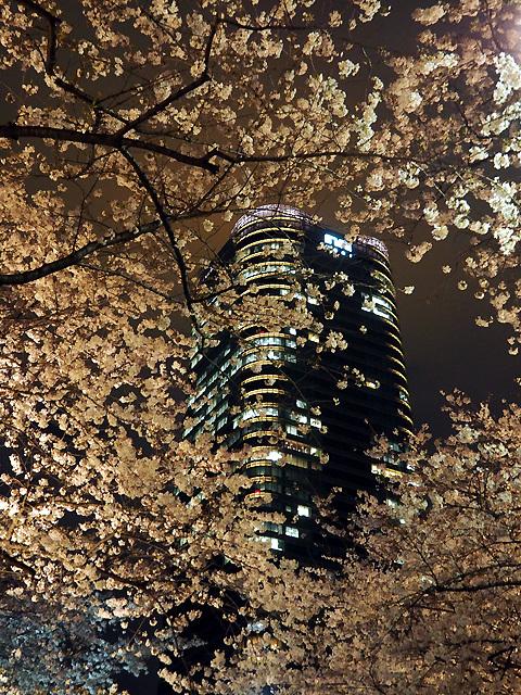 夜桜散歩_d0358793_09063826.jpg