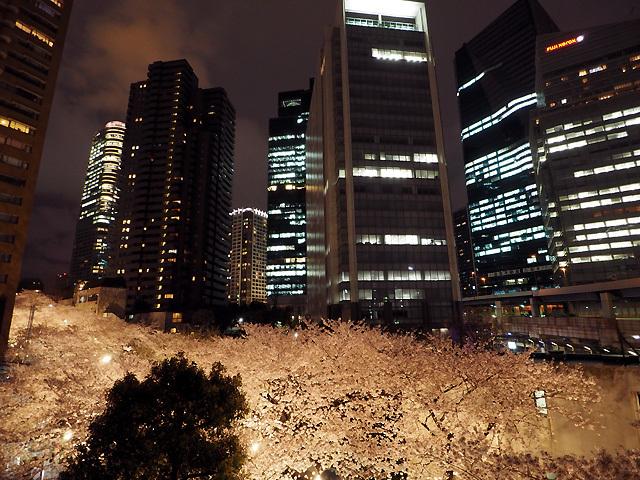 夜桜散歩_d0358793_09101499.jpg