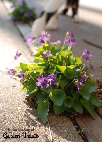 ガーデニングの季節到来。裏庭の様子(4月上旬)_b0253205_06540846.jpg