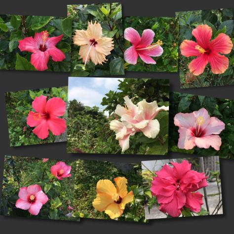 花の見つめる先に_c0176406_21283677.jpg