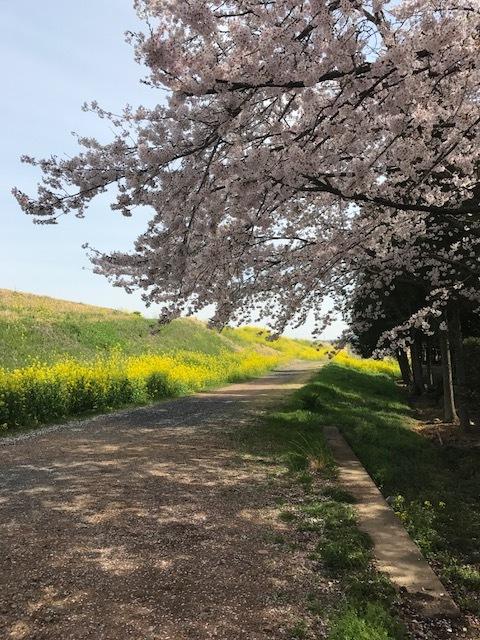 """足利市 I邸に向かう途中! \""""さくらの花と菜の花""""のコントラストがとてもキレイでした。_e0361918_10260235.jpg"""