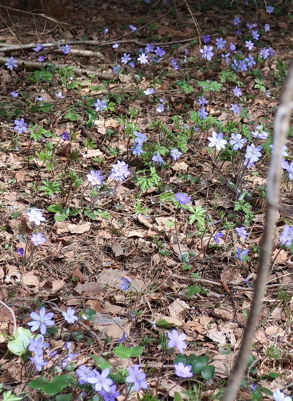 森歩き_a0353839_23365018.jpg