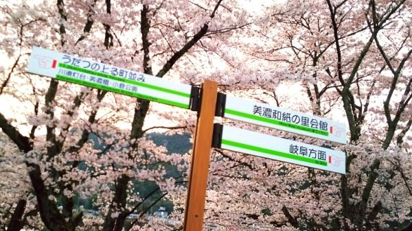 4/9(日) お花見と花みこし_a0272042_01234812.jpg