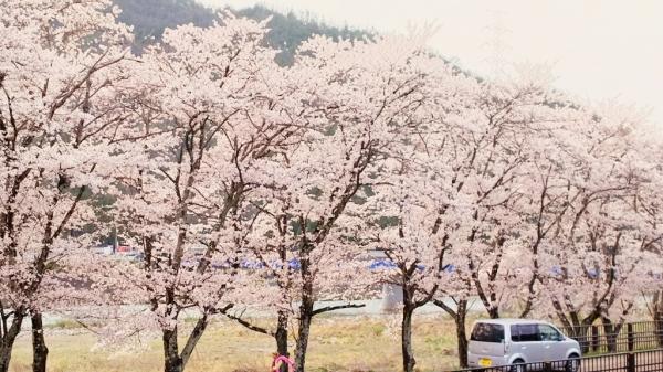 4/9(日) お花見と花みこし_a0272042_01243890.jpg