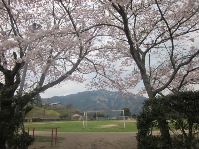 宮水小学校の桜_e0173655_15512182.jpg
