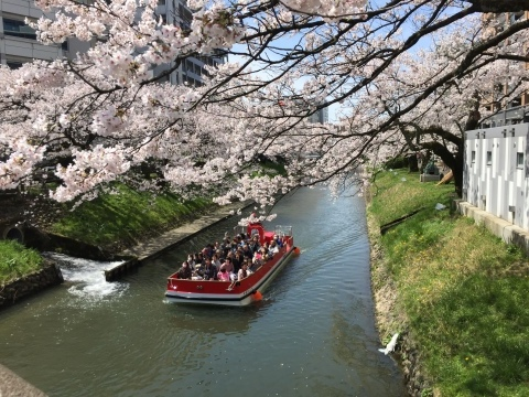 桜が満開です。_f0320958_16403875.jpg