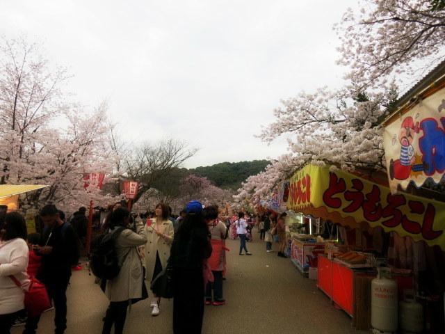 京都お花見 ③円山公園の枝垂れ桜 ・4月6日_f0236260_14382429.jpg