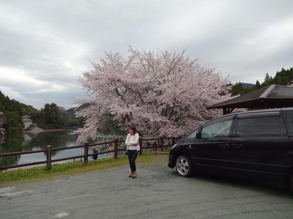 ジムか?桜な宮川_c0245666_13212386.jpg