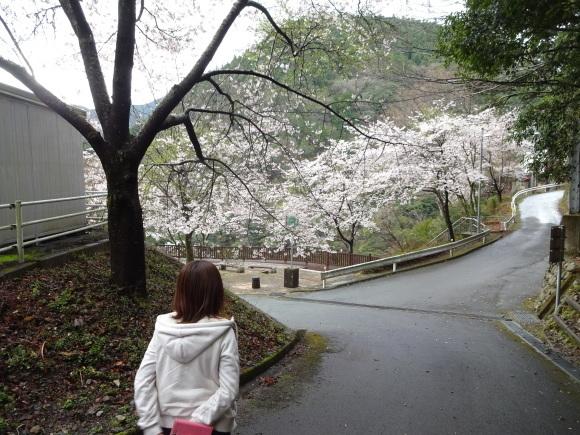 ジムか?桜な宮川_c0245666_13214784.jpg