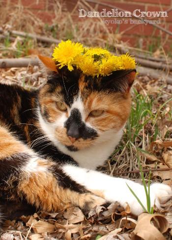 Whitneyにたんぽぽの花冠を進呈_b0253205_07155992.jpg