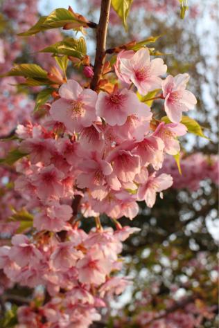 花の見つめる先に_c0176406_21432745.jpg