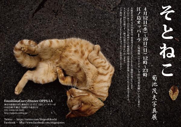 水曜から菊池茂夫 ねこ写真展 【 そとねこ 】が猫の聖地 江の島を一望するレストランOPPA-LAで開催😻_d0106911_02324940.jpg
