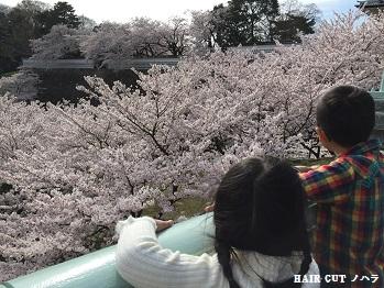 お花見 ~兼六園~_e0145332_2017349.jpg