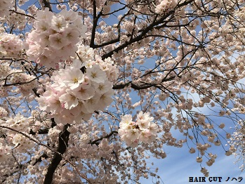 お花見 ~兼六園~_e0145332_20175510.jpg
