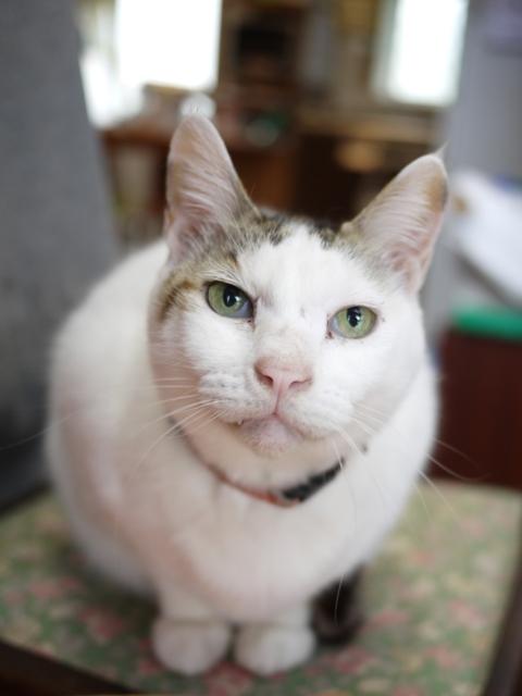 猫のお留守番 ガブくん編。_a0143140_20142963.jpg
