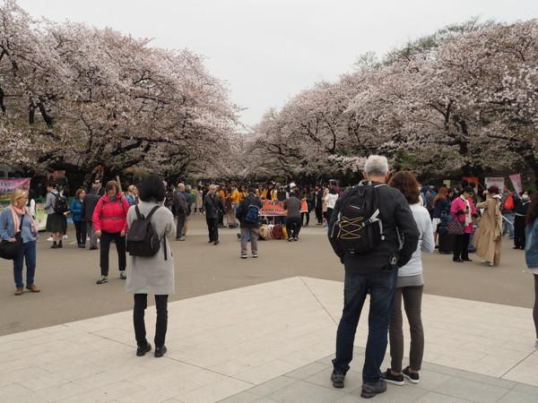 今年の桜総集編_d0027243_09390293.jpg
