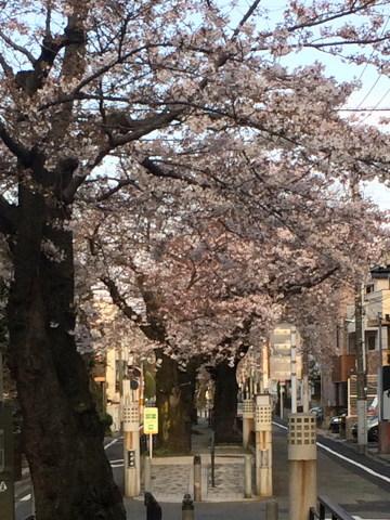 今年の桜総集編_d0027243_10044195.jpg
