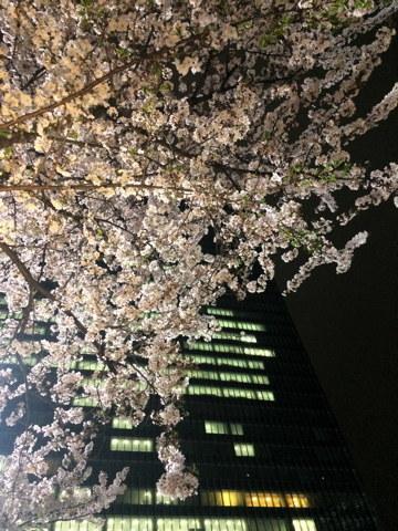 今年の桜総集編_d0027243_10190735.jpg