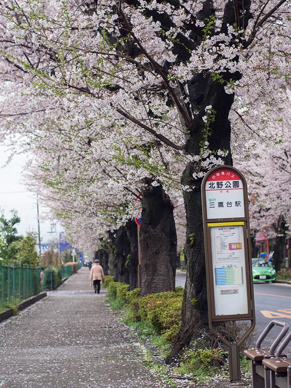 三鷹新川浄水場通り_a0003650_21575389.jpg