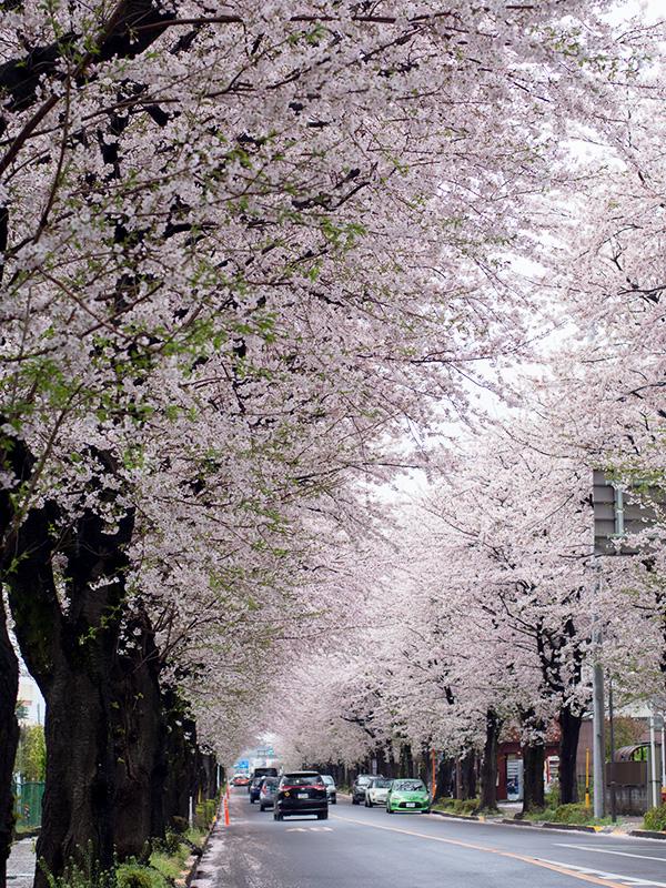 三鷹新川浄水場通り_a0003650_21581255.jpg