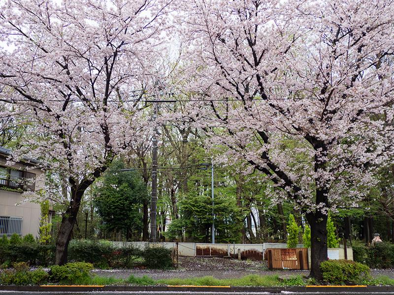 三鷹新川浄水場通り_a0003650_21582037.jpg
