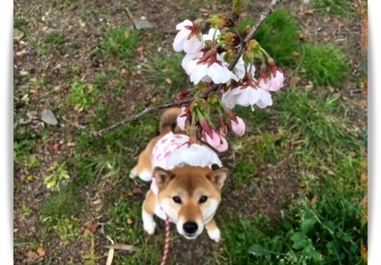 やっと咲いたけど_c0049950_15001792.jpg