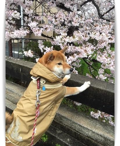 やっと咲いたけど_c0049950_15055458.jpg
