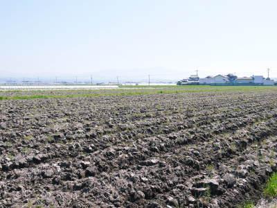 熊本の美味しいお米(七城米 長尾さんちのこだわりのお米)大好評発売中!現在の田んぼの様子を現地取材!_a0254656_18043487.jpg