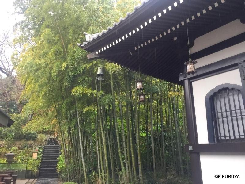 ☂ 雨の鎌倉散策 ☂  最終回 長谷寺_a0092659_18190384.jpg