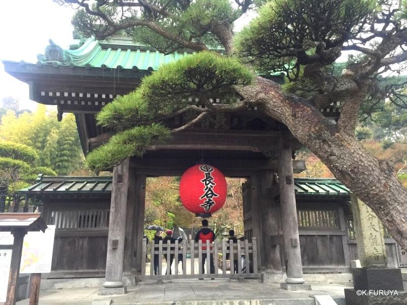 ☂ 雨の鎌倉散策 ☂  最終回 長谷寺_a0092659_20143210.jpg