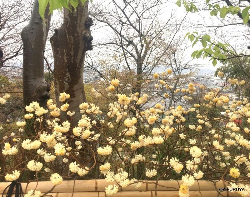 ☂ 雨の鎌倉散策 ☂  最終回 長谷寺_a0092659_22403875.jpg