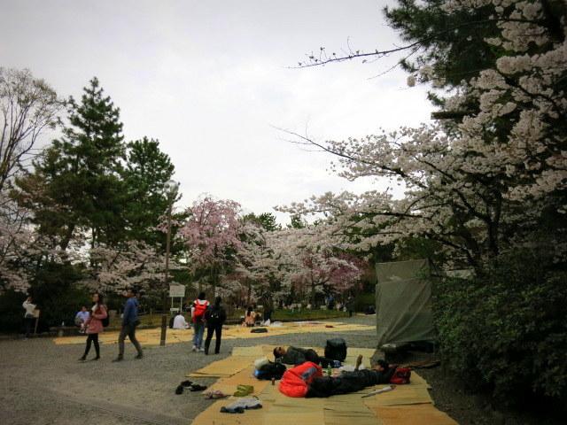 京都お花見 ③円山公園の枝垂れ桜 ・4月6日_f0236260_13294260.jpg