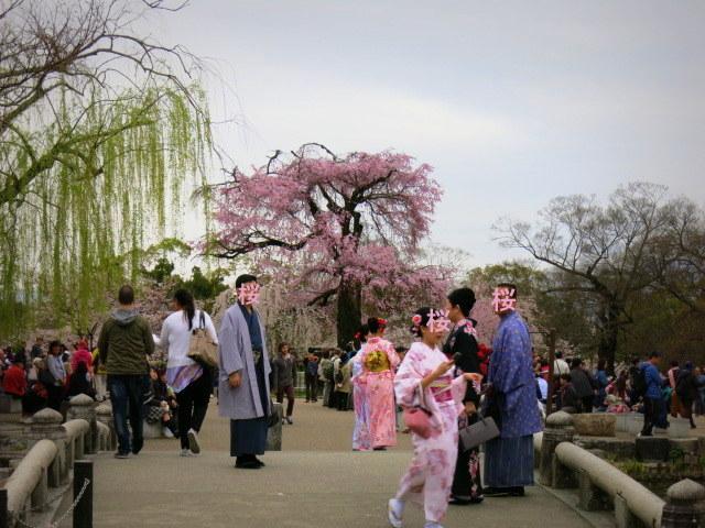 京都お花見 ③円山公園の枝垂れ桜 ・4月6日_f0236260_13372483.jpg