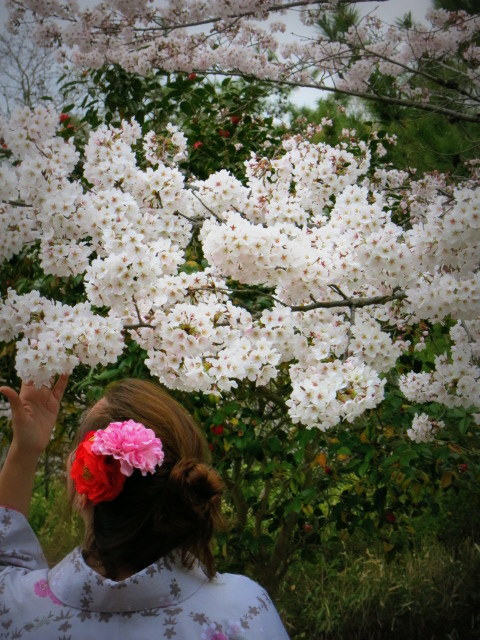 京都お花見 ③円山公園の枝垂れ桜 ・4月6日_f0236260_13453433.jpg
