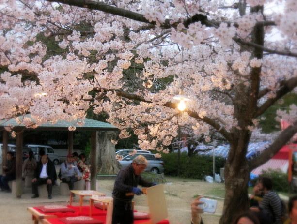 京都お花見 ③円山公園の枝垂れ桜 ・4月6日_f0236260_13493708.jpg
