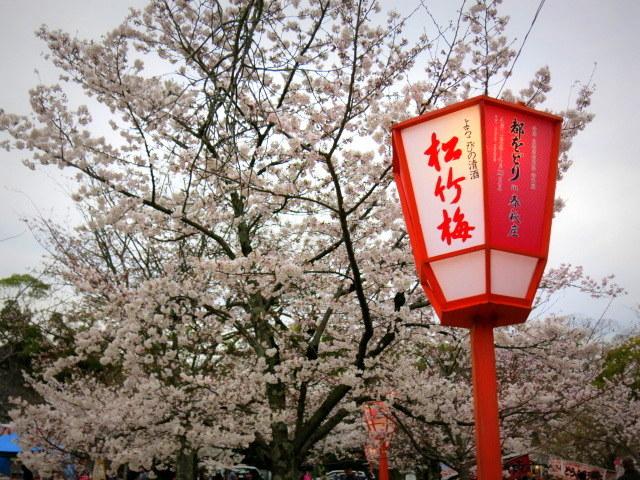 京都お花見 ③円山公園の枝垂れ桜 ・4月6日_f0236260_13504964.jpg