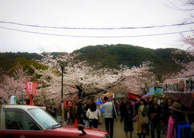 京都お花見 ③円山公園の枝垂れ桜 ・4月6日_f0236260_14024551.jpg