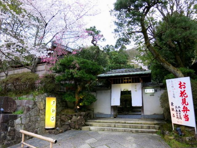 京都お花見 ③円山公園の枝垂れ桜 ・4月6日_f0236260_14545401.jpg