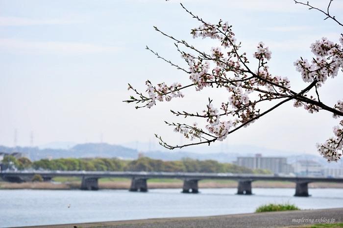桜2017-晴れ-_f0234062_22145938.jpg