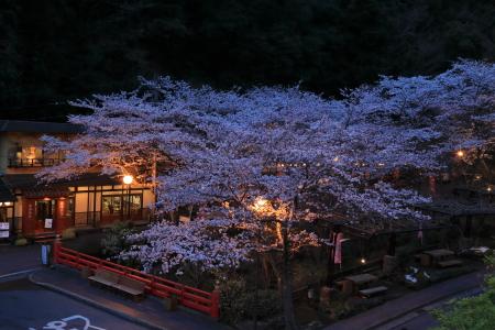 今年の桜_f0185066_13241847.jpg