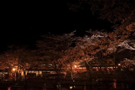 今年の桜_f0185066_13243193.jpg