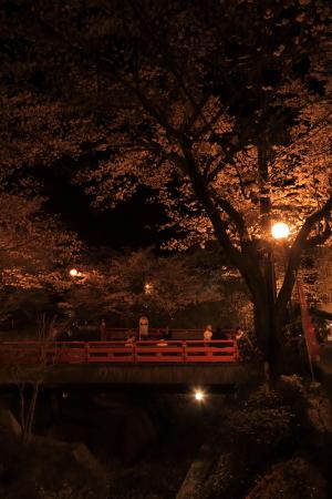 今年の桜_f0185066_13244269.jpg