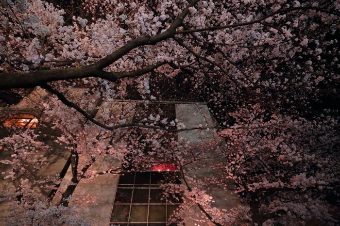 桜  2017  地蔵禅院_f0021869_23430370.jpg