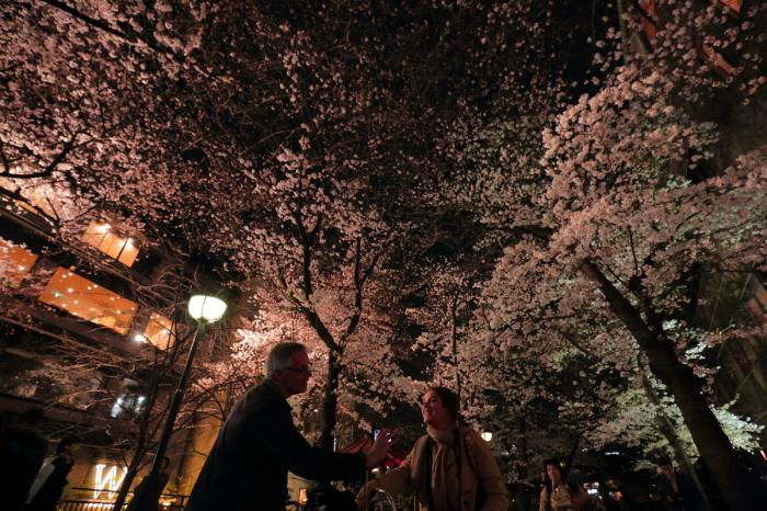 桜  2017  地蔵禅院_f0021869_23433376.jpg