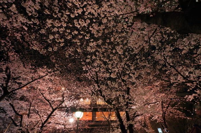 桜  2017  地蔵禅院_f0021869_23434963.jpg