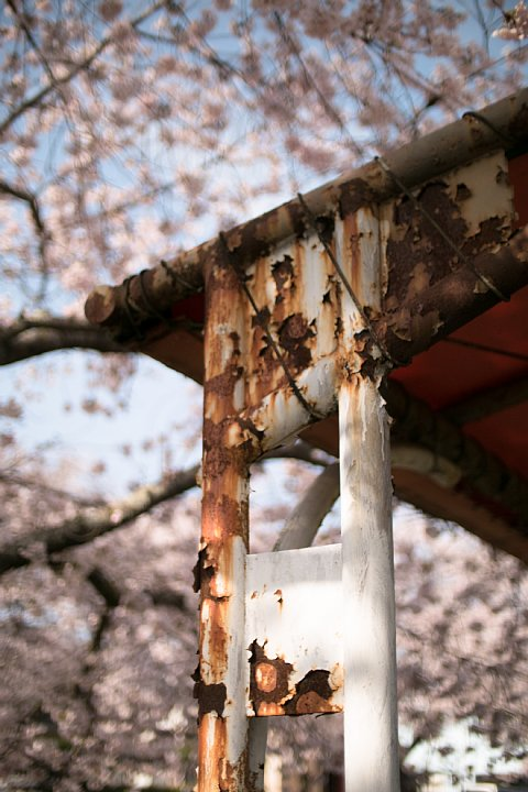 春爛漫の廃駅_d0353489_20312769.jpg