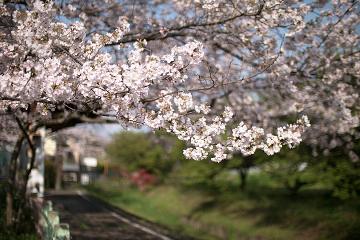 春爛漫の廃駅_d0353489_2031997.jpg