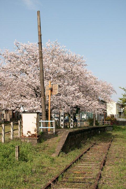 春爛漫の廃駅_d0353489_20332150.jpg