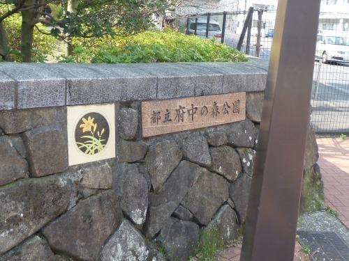 絶好の桜見_a0262093_18230996.jpg